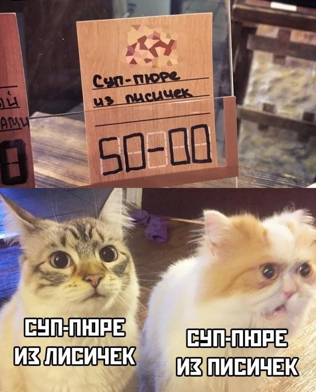 Подборка прикольных фото (61 фото) 13.03.2020