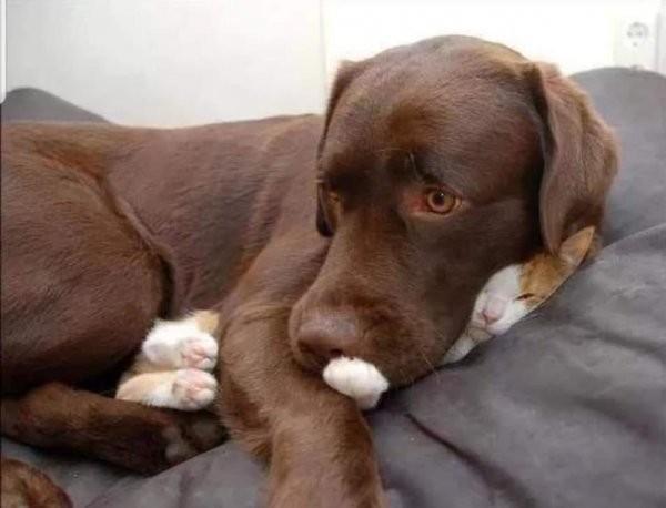 Домашние животные - лучшее лекарство от депрессии (13 фото)