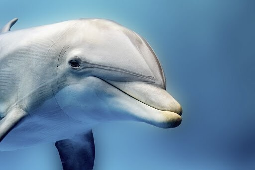 Откуда дельфины и киты получают пресную воду? (7 фото)