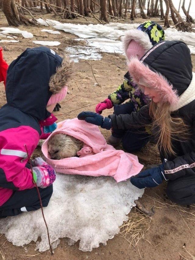 Местные жители спасли детеныша нерпы (3 фото)