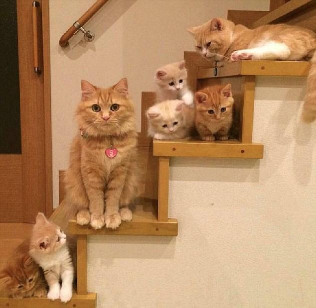 Кошачьи семьи в фотографиях (12 фото)