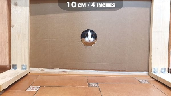 Коты это жидкость (9 фото)