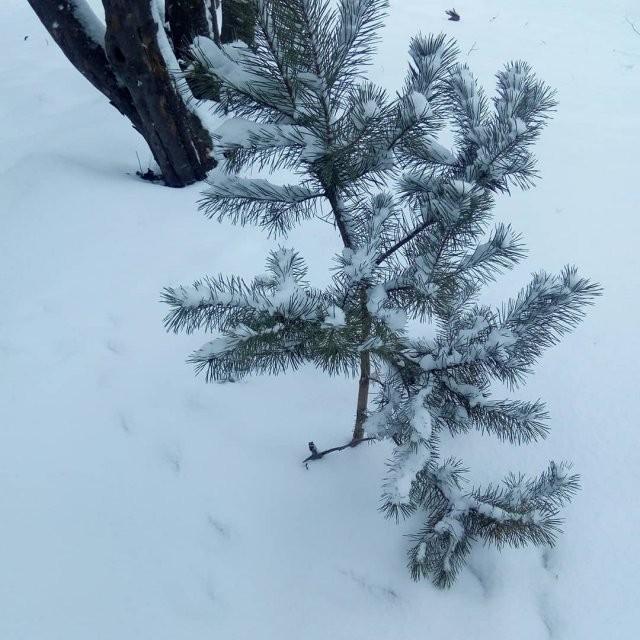 Соскучились по снегу? А в Европе он снова есть… (17 фото)