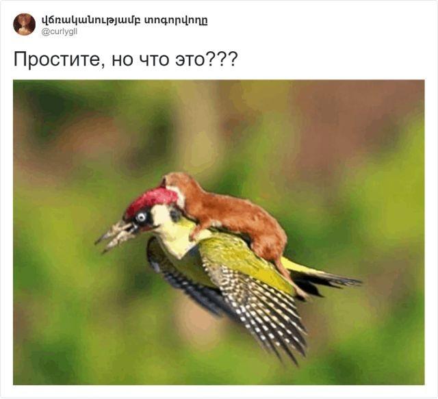 Зоологический тред в Твиттере: пользователи поразились (10 фото)