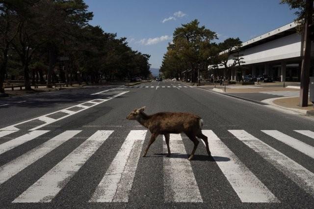Опустевшие города заполонили дикие звери (15 фото)