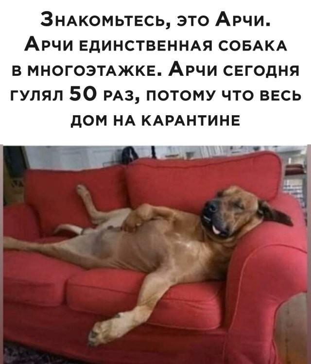 Подборка прикольных фото (63 фото) 01.04.2020