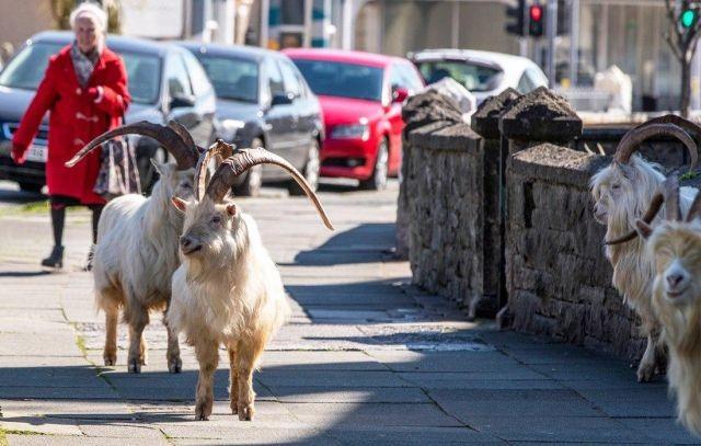 В Уэльс вернулись туристы (4 фото)