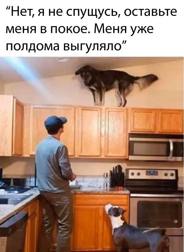 Подборка прикольных фото (69 фото) 02.04.2020