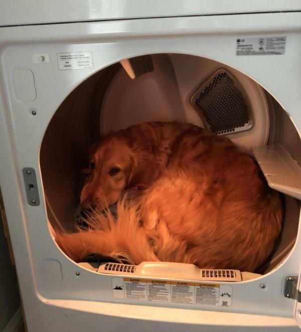 Собаки, у которых сбились заводские настройки (19 фото)