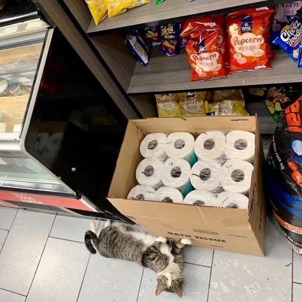 Забавные фотографии кошек в круглосуточных магазинах (31 фото)