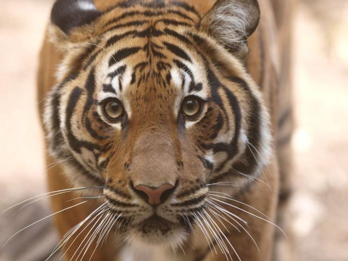 Животные в фотографиях (19 фото)