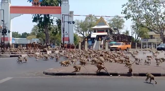 Дикие животные заполонили города (11 фото)