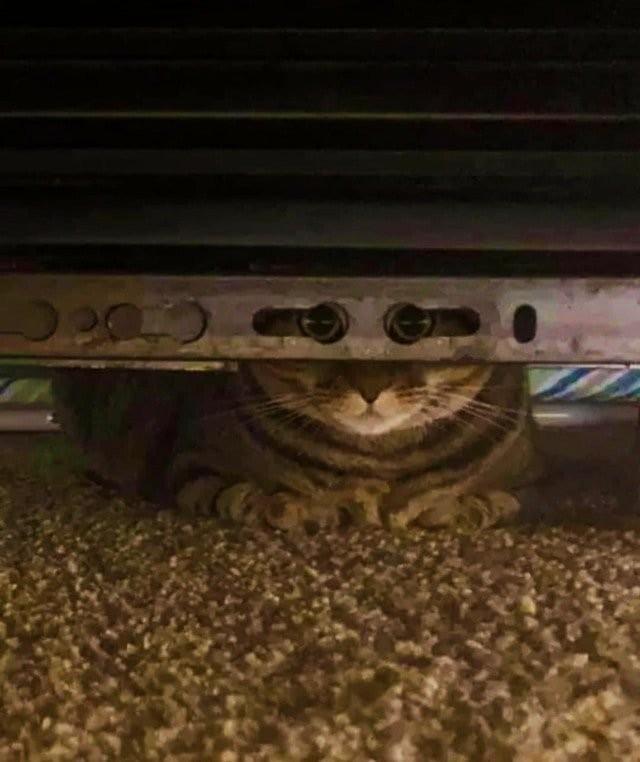 Кот посмотрел в камеру через отверстия и стал героем мемов (15 фото)
