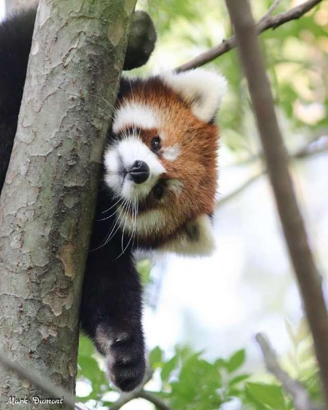 Животные родом из другой эры, которые дожили до нашей (4 фото)