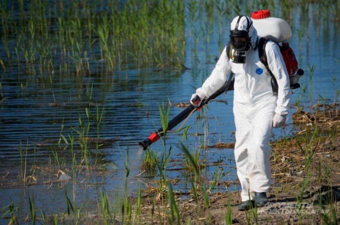Для чего в Китае разводят комаров на специальном заводе (7 фото)