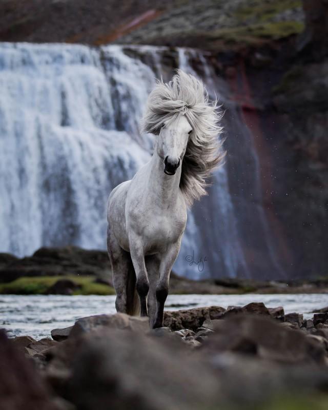 Лошади на фоне исландских пейзажей (21 фото)