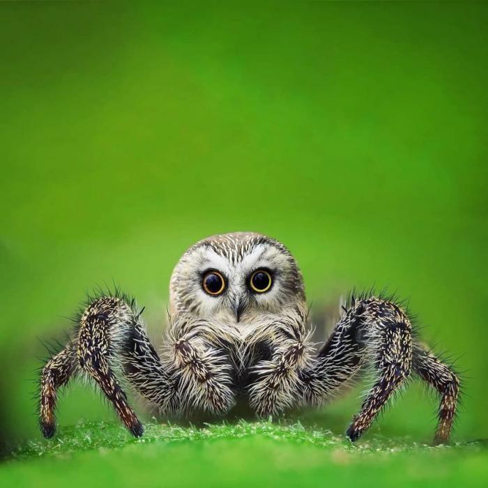 Гибриды животных в Photoshop (17 фото)