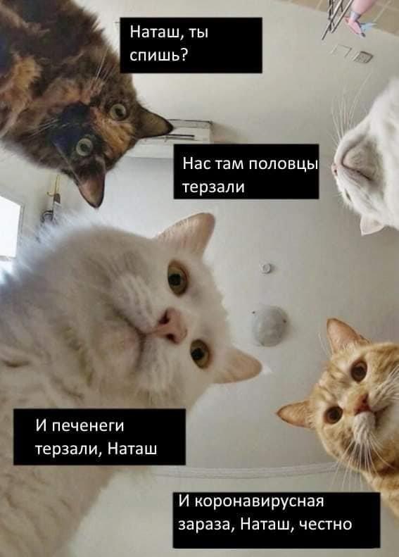 Печенеги, половцы, слабый рубль - что волнует котов и Наташу (14 фото)