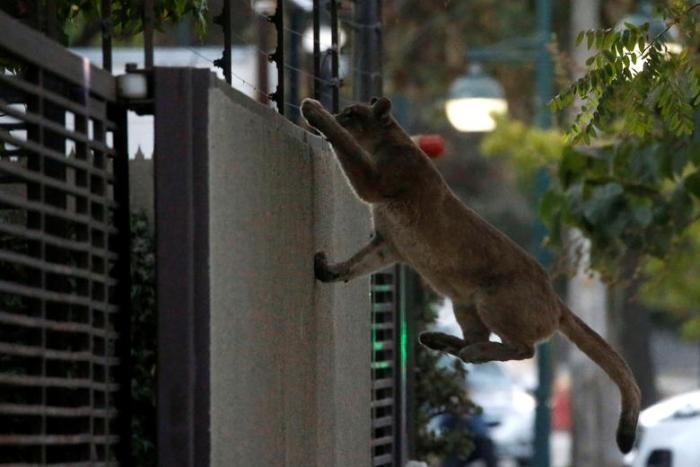 Природа вторгается в города во время карантина (11 фото)