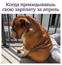 Грустный пёс по кличке Большой папочка покорил Сеть (5 фото)