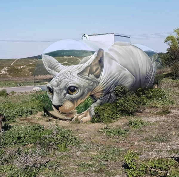 Уличный художник Том Брагадо Бланко заставляет стены оживать (14 фото)