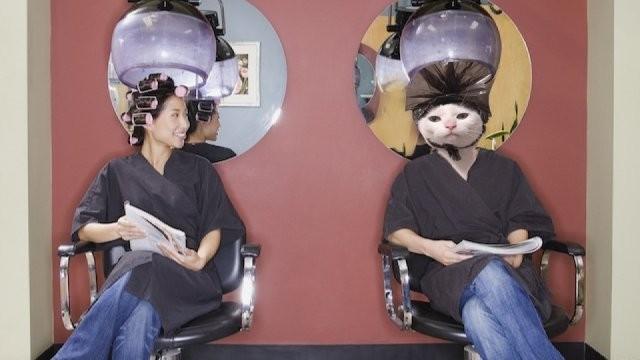 Хозяин сфотографировал своего кота с пакетом на голове (12 фото)