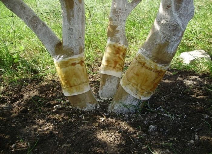 Ловчий пояс для дерева своими руками (5 фото)