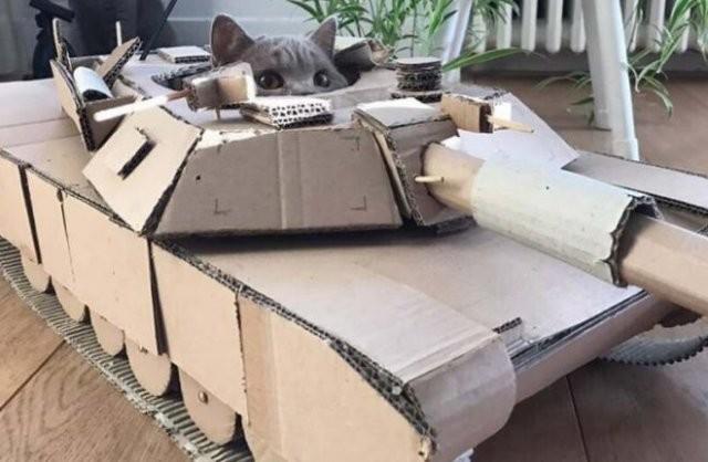 """На карантине начали делать""""бронетехнику""""для котов из картона (15 фото)"""