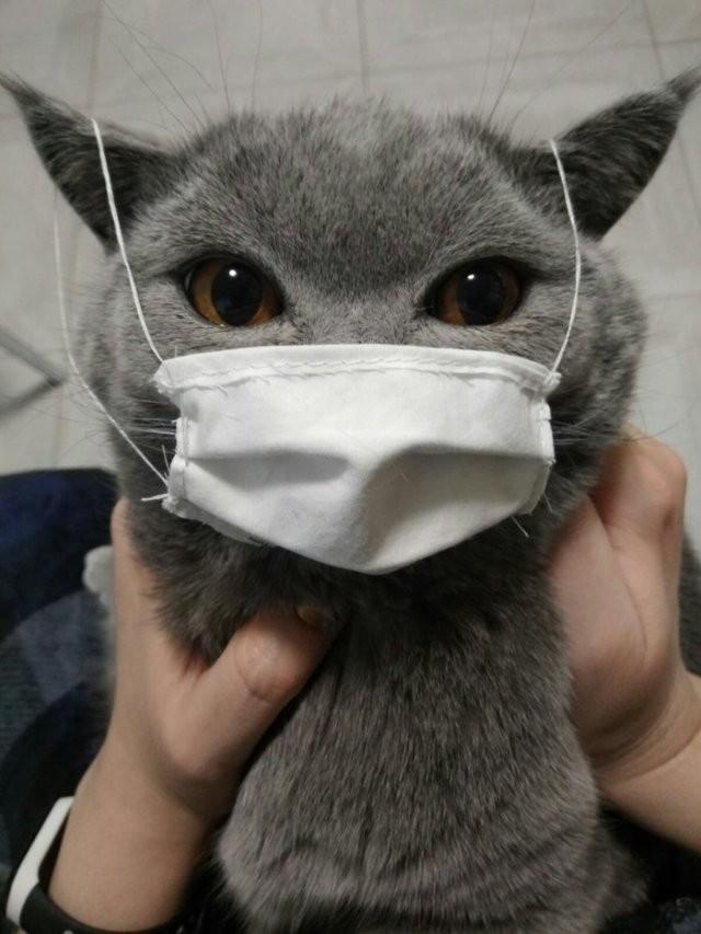 О людях, которые не знают, для чего нужны защитные маски (15 фото)