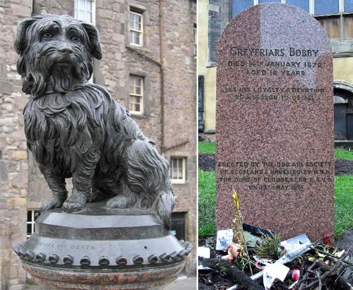 Собаки, которые доказали, что преданность существует (4 фото)