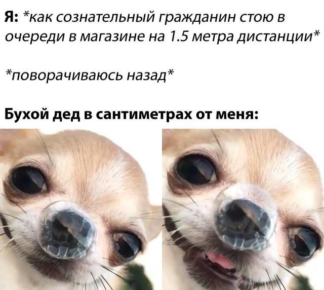 Шутки о карантине, самоизоляции и удаленке: юмор из Сети (15 фото)