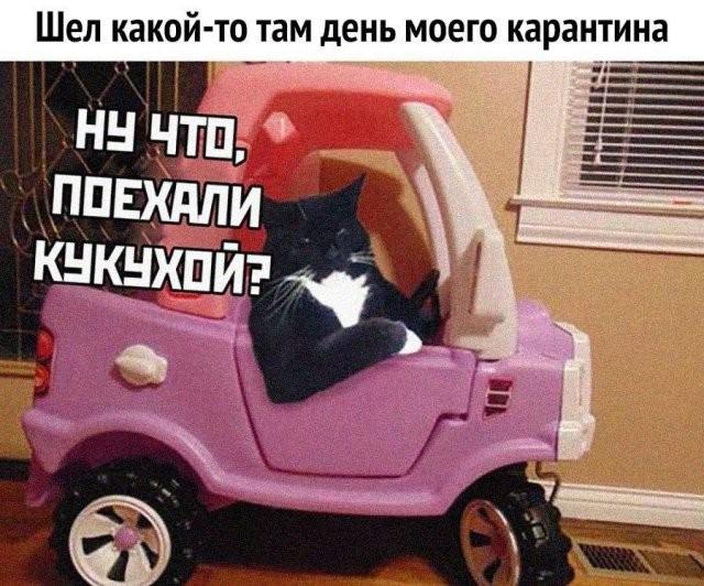 Подборка мемов о коронавирусе (15 фото)
