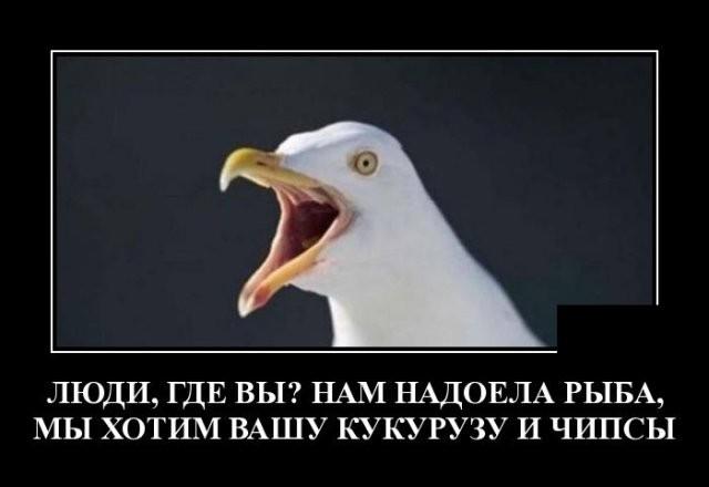 Демотиваторы (20 фото) 12.05.2020