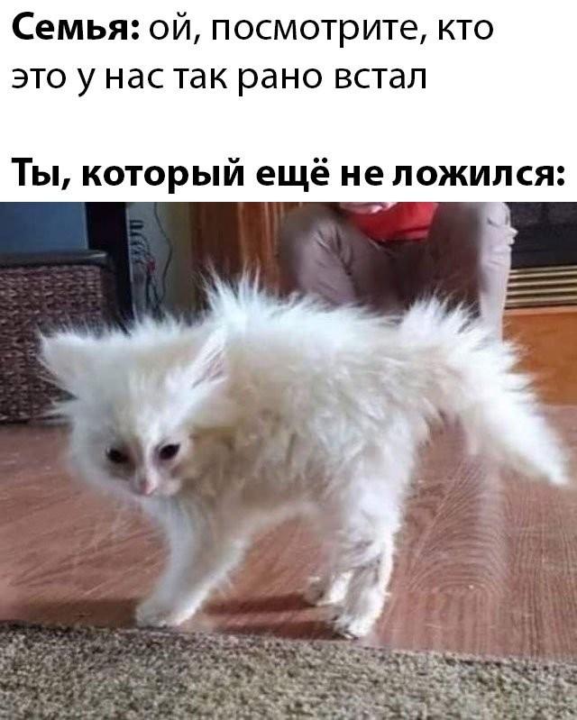 Подборка прикольных фото (62 фото) 12.05.2020