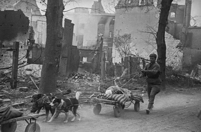Фотографии времен Второй Мировой войны (15 фото)