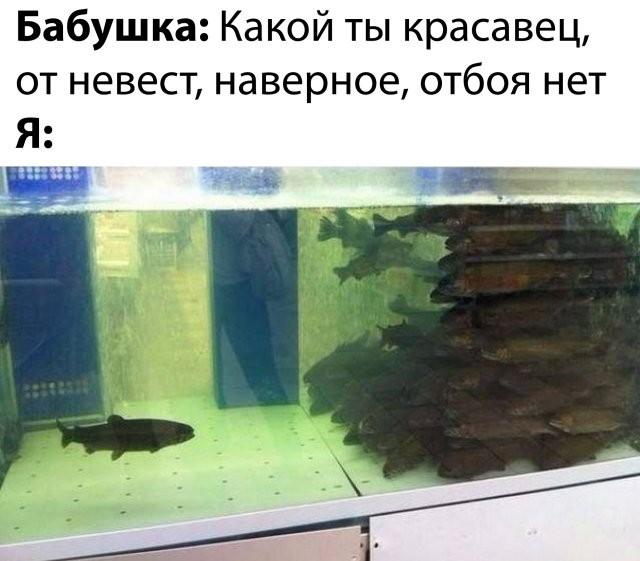 Подборка прикольных фото (67 фото) 13.05.2020