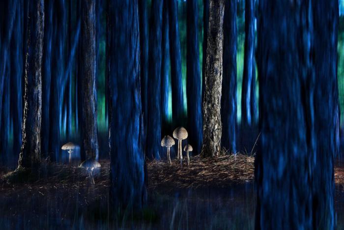 Лучшие работы с конкурса BigPicture Natural World Photography (11 фото)