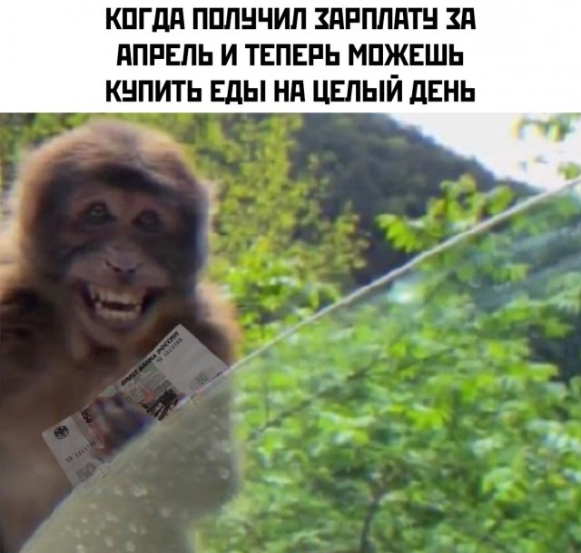Карантин, работа и самоизоляция: шутки из Сети (14 фото)