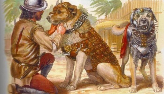 Боевые собаки – оружие конкистадоров (5 фото)