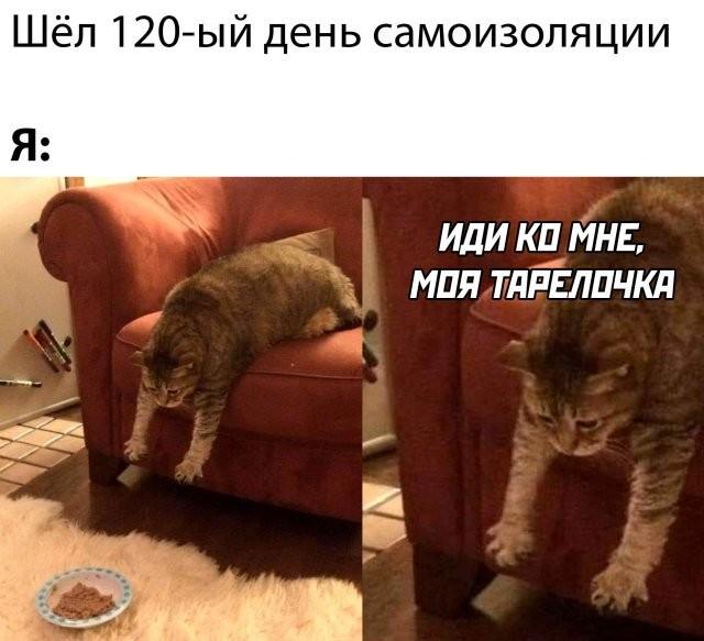 Подборка прикольных фото (66 фото) 14.05.2020