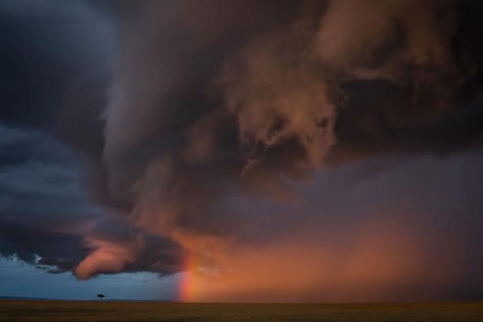 Лучший фотограф природы 2020 (22 фото)