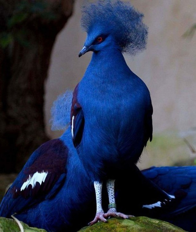 Прекрасные птицы, способные поразить вас своей красотой (19 фото)