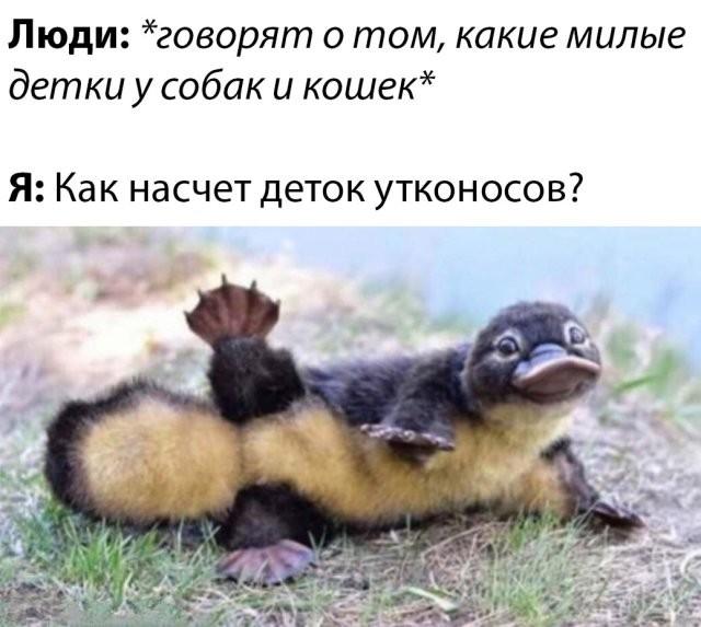 Подборка прикольных фото (61 фото) 19.05.2020