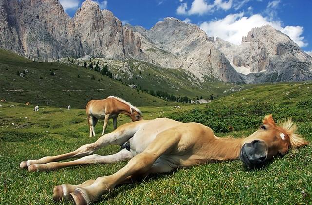 Как спят лошади: стоя или лежа? (2 фото)