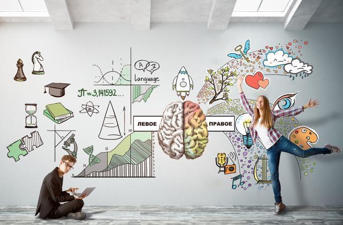 За логику и творчество отвечают разные полушария мозга? (2 фото)