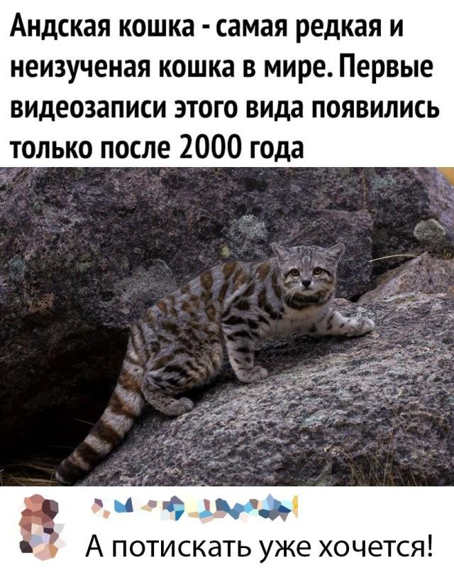 Подборка прикольных фото (65 фото) 22.05.2020