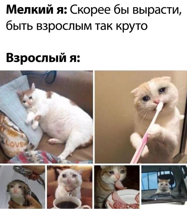 Подборка прикольных фото (65 фото) 26.05.2020