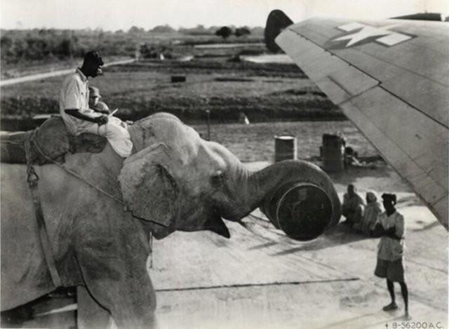 Интересные фотографии и факты из прошлого (15 фото)
