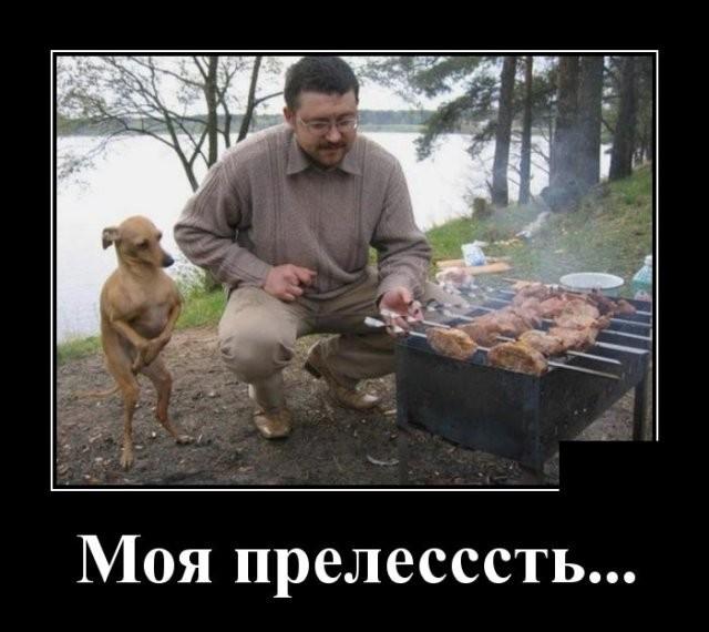 Подборка прикольных фото (63 фото) 28.05.2020