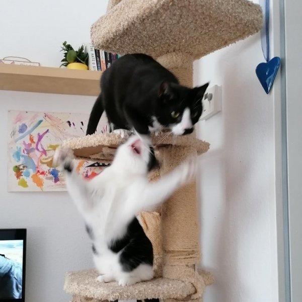 Забавные конфликты домашних животных (12 фото)